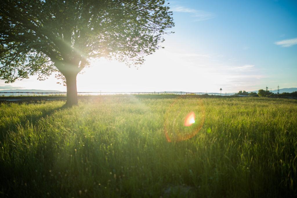 Слънчева поляна